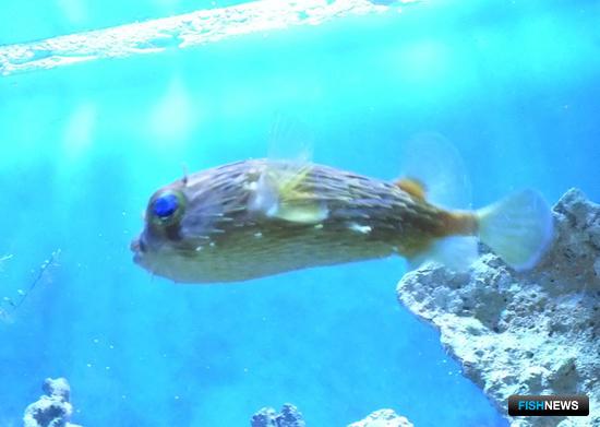 Для гостей океанариума сотрудники ТИНРО-Центра провели экскурсию