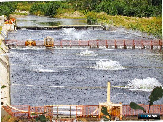 Лососеразводные заводы Сахалинской области