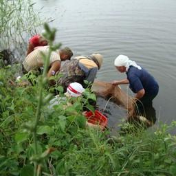 Специалисты Азовского НИИ рыбного хозяйства в рамках госзадания переселили в дикую природу 306 тыс. экземпляров молоди судака. Фото пресс-службы института