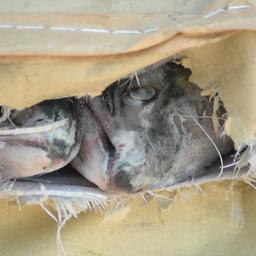 Идея о запрете рыбного экспорта не встретила поддержки