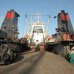 Pacific Andes попросили из российской рыбодобывающей отрасли