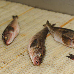 Приморская краевая программа поддержки рыбного комплекса: к делу подошли с душой, с умом – не получилось