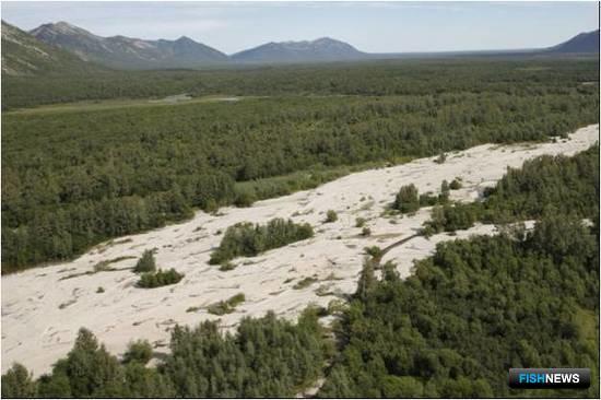 Обмелевшее русло реки Ивашка (верхнее течение). Фото пресс-службы КамчатНИРО