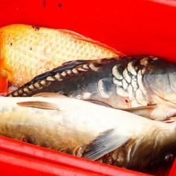 Рыбаков призывают ускорить подготовку к электронной ветсертификации