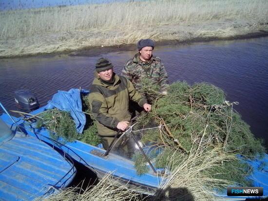 Специалисты Байкалрыбвода устанавливают гнезда искусственных нерестилищ из лапника. Фото пресс-службы учреждения