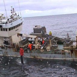 Передача 700-тонного улова на транспортное судно