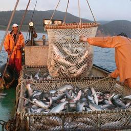 Слухи о затоваривании рынка обесценивают российский лосось