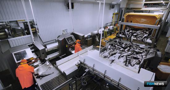 Предприятие рассчитано на выпуск охлажденной и мороженой продукции с высокой степенью переработки. Фото РК «КАРАТ»
