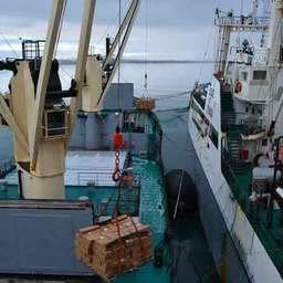 В районе промысла уловы сельди перегружают на транспортное судно