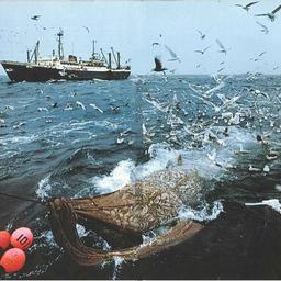 Американский траулер «Викинг» перевозит 20 тонн трески на советское судно «Надеждинск» в Беринговом море. Фото из архива MRCI.
