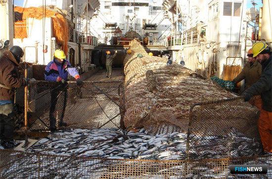 Вылов сельди российскими рыбаками