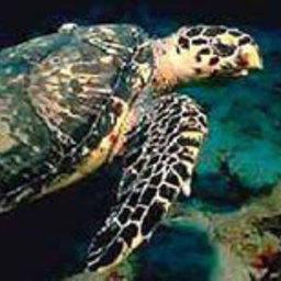 Более 30 морских черепах спасено от холода на побережье Мексиканского залива