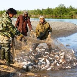 Представители КМНС ловят рыбу на Камчатке. Фото kamchat.info