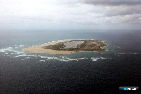 Площадь морского заповедника «Папаханаумокуакеа» на Гавайях увеличена в четыре раза. Фото Центра новостей ООН