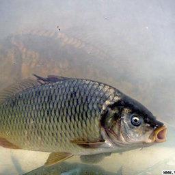 На развитие рыбной отрасли Волгограда выделено более 15 млн. рублей