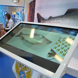 Покупатели могли на месте посмотреть фото предлагаемой продукции