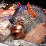 Импортеры рыбопродукции оценили возможности российского рынка