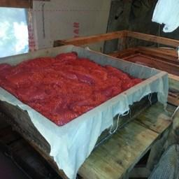 Также изъяты грохотка и большое количество сырой и соленой икры. Фото пресс-службы Охотского теруправления Росрыболовства