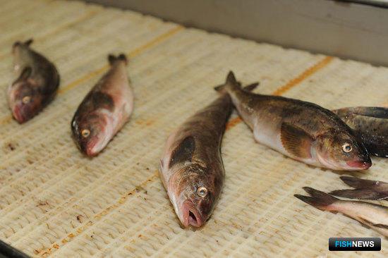 Программе поддержки рыбкомплекса Приморья не хватает механизмов реализации
