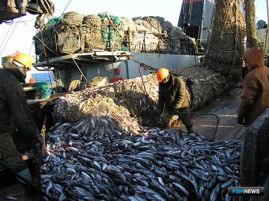 АДМ работает над сертификацией промысла минтая в Беринговом море