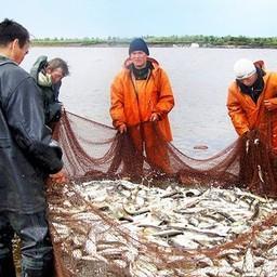 Добыча рыбы на Ямале. Фото с сайта Ok.ru