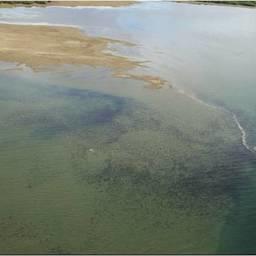 Скопление нерки в устье реки Верхняя Палана. Фото пресс-службы КамчатНИРО
