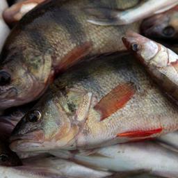 «Горячие точки» российской аквакультуры