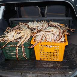 Иностранный гражданин организовал во Владивостоке цех для нелегальной продажи краба. Фото Пограничного управления ФСБ России по Приморскому краю