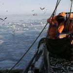 Рыбаки требуют ветеринарного расследования