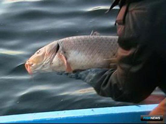 Рыбоохране России - 75 лет