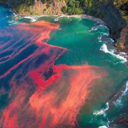 Филиппинское побережье отравлено «красным приливом»