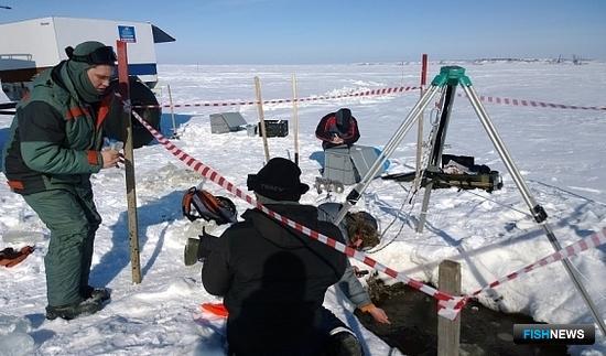 Ученые исследуют экологические проблемы и кормовую базу рыб в Обской губе