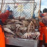Российский промысел камчатского краба в Баренцевом море первым в мире получил сертификат MSC