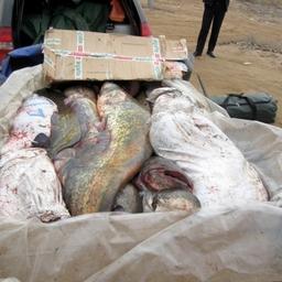 В прицепе инспекторы обнаружили мешки с рыбой частиковых видов. Фото пресс-службы УМВД России по Астраханской области