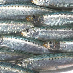 Возвращение «неверной рыбы»