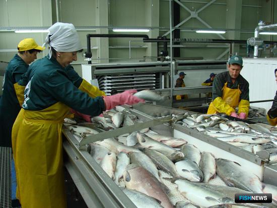 России досталось больше камчатской рыбы