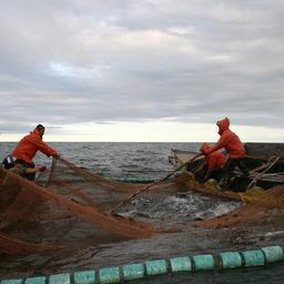 РСПП против дискриминации российской рыбы