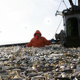 Ключевые для рыбаков вопросы обсудят на Всероссийском съезде