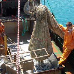 Ученые Азовского НИИ рыбного хозяйства и океанографии провели рейс по оценке запасов промысловых рыб Черного моря. Фото пресс-службы института