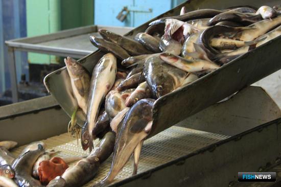 Рыбаки Приморья предложили поддержать поставки на российский берег