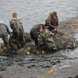 За сентябрь организации Новосибирской области выбрали 337,6 тонн выращенной товарной рыбы. Фото пресс-службы регионального департамента природных ресурсов и охраны окружающей среды
