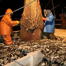 Государство и рыбаки ищут «золотую середину»