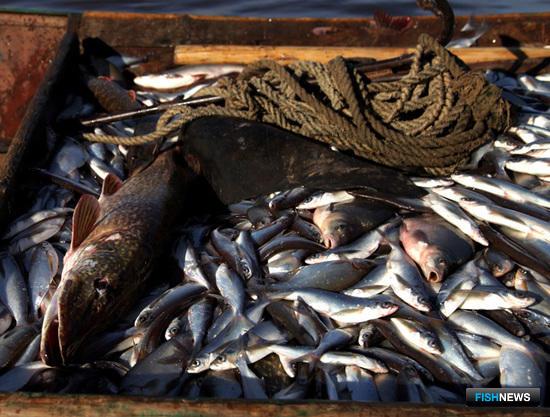 Минсельхоз утвердил, сколько можно поймать в реках и озерах
