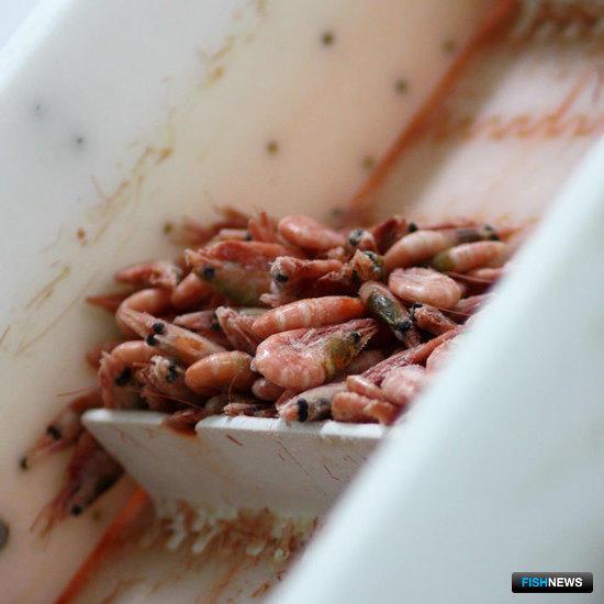 Проверку рыбных поставщиков предложено поручить ФАР