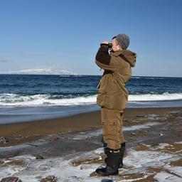 Специалисты посчитали северных морских львов у берегов Кунашира. Фото пресс-службы заповедника «Курильский»