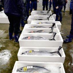 Мелкий голубой тунец на рынке в префектуре Нагасаки. Фото Yomiuri Shimbun