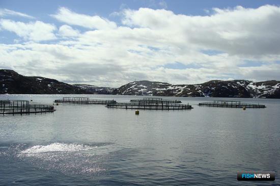 Морской участок компании: в заливе установлены садки с атлантическим лососем