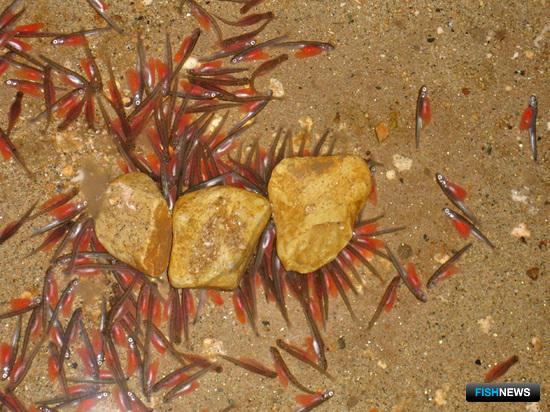 Нормативную базу подстроят под закон об аквакультуре
