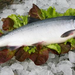 В законопроекте удалось отразить особенности ветконтроля рыбы