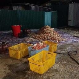 Пограничники обнаружили нелегальное производство крабовой продукции в поселке Зарубино. Фото пресс-группы Погрануправления ФСБ России по Приморскому краю
